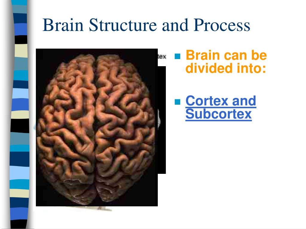 Brain Structure and Process
