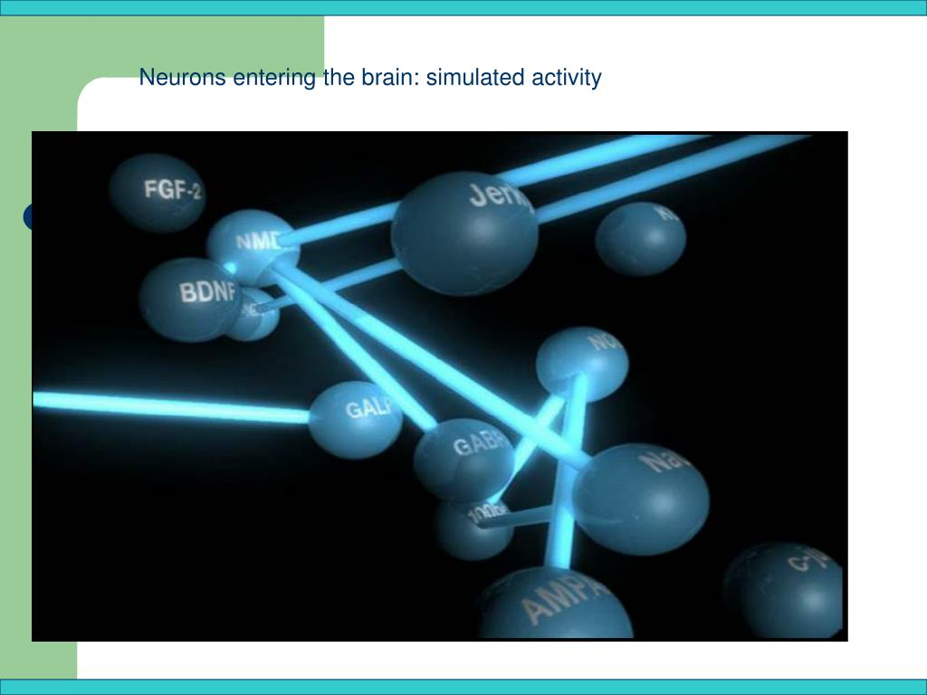 Neurons entering the brain: simulated activity