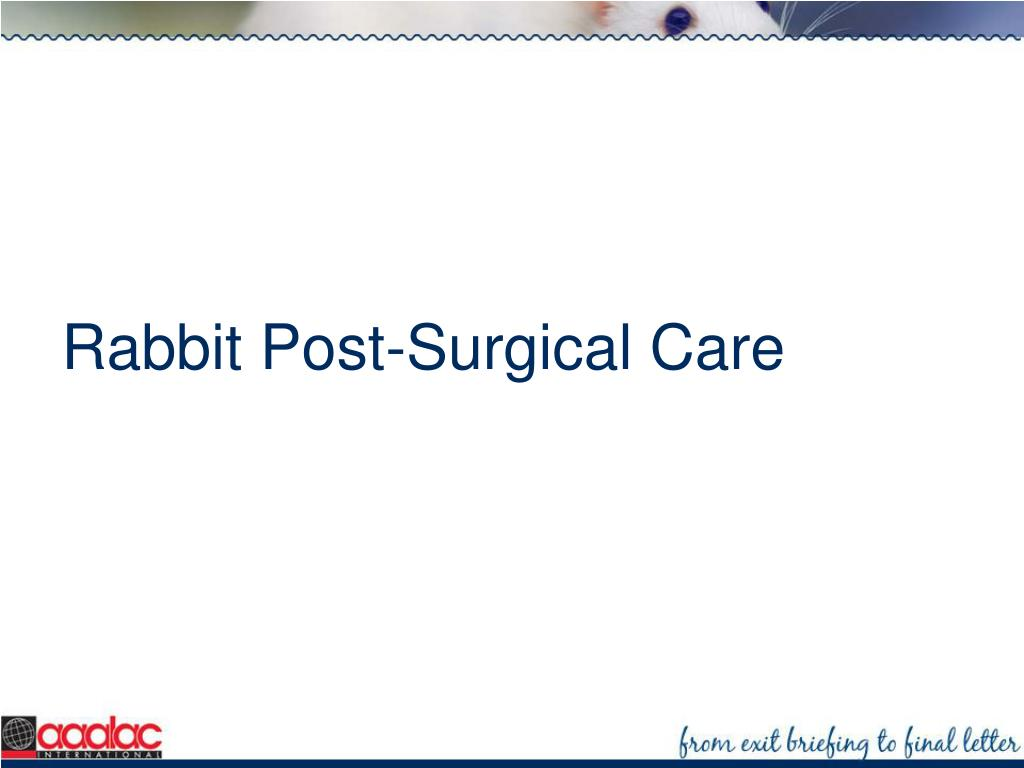 Rabbit Post-Surgical Care