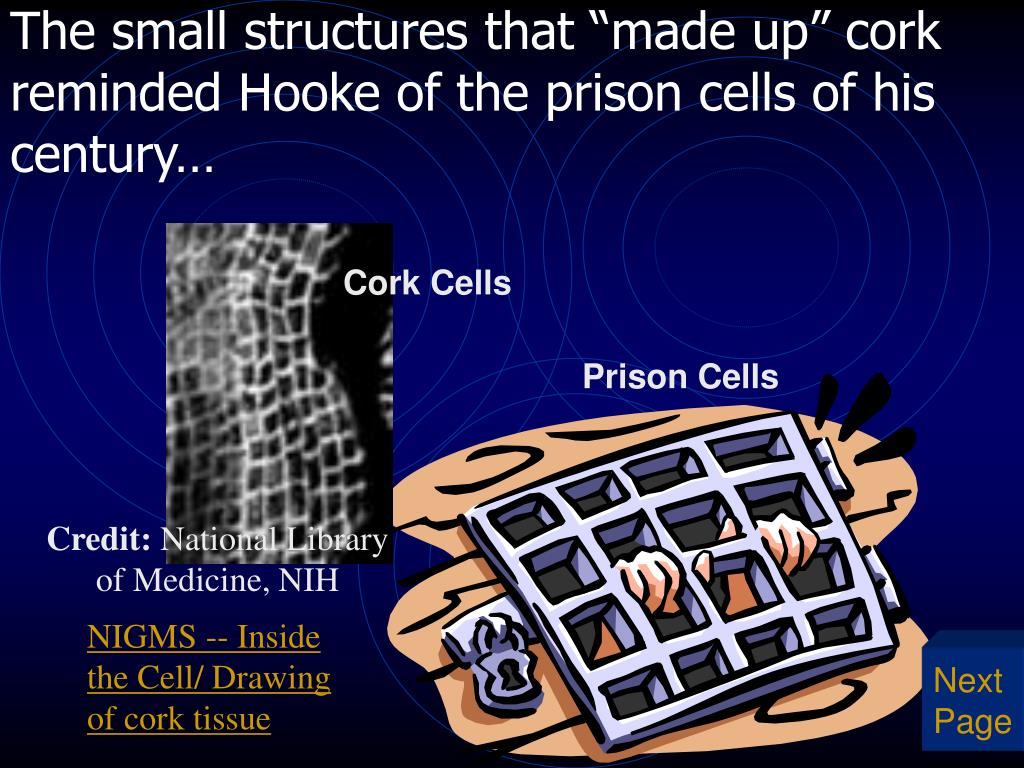 "The small structures that ""made up"" cork reminded Hooke of the prison cells of his century…"