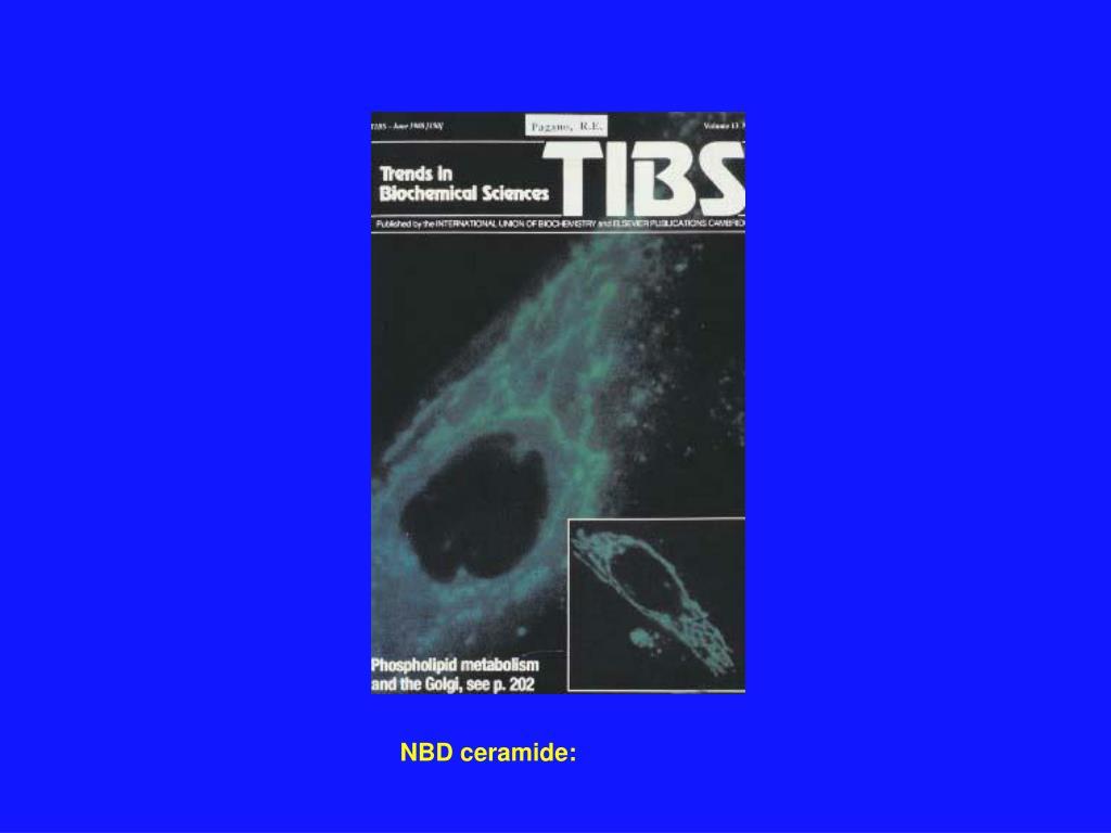 NBD ceramide: