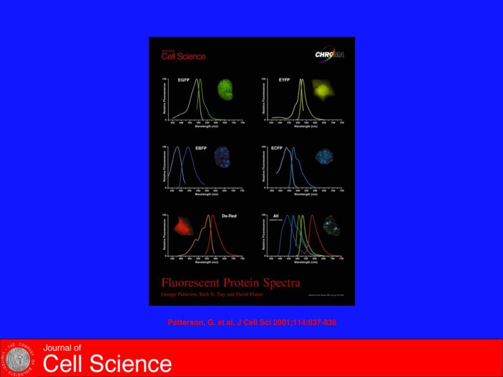 Patterson, G. et al. J Cell Sci 2001;114:837-838