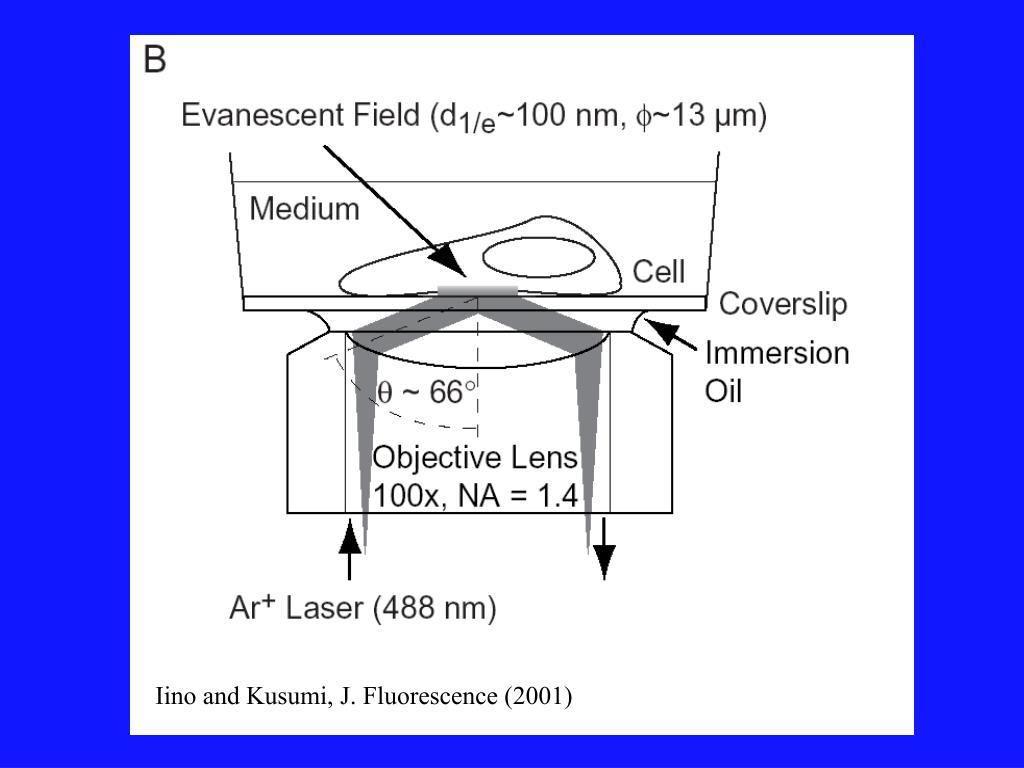 Iino and Kusumi, J. Fluorescence (2001)
