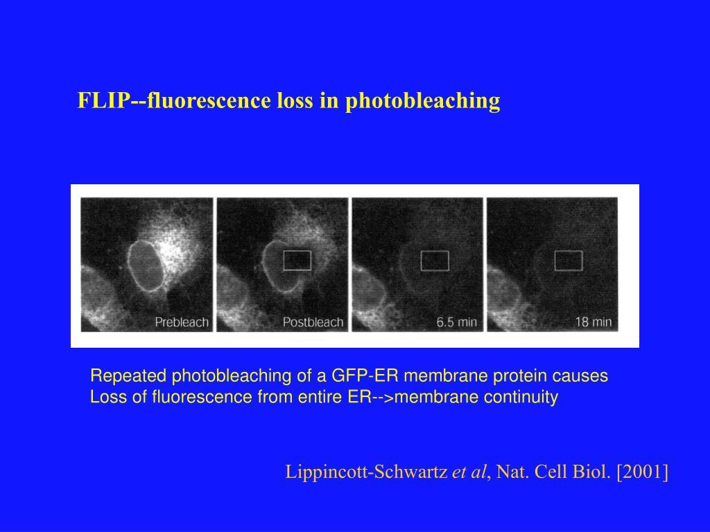 FLIP--fluorescence loss in photobleaching