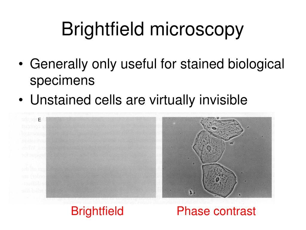 Brightfield microscopy