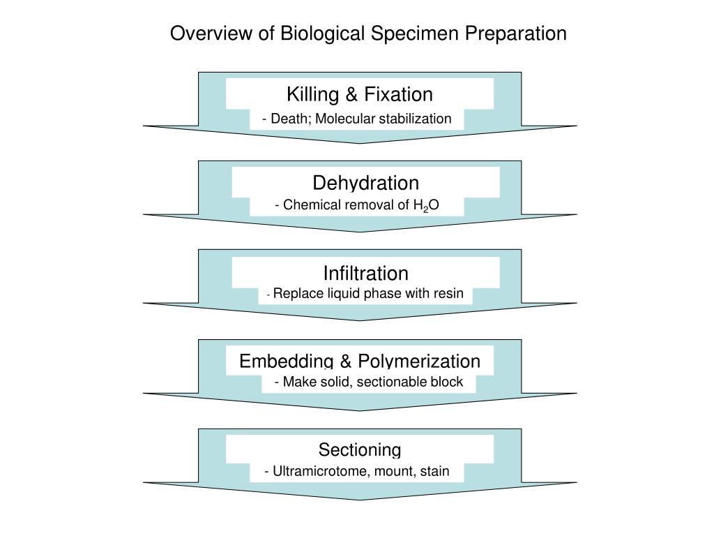 Overview of Biological Specimen Preparation