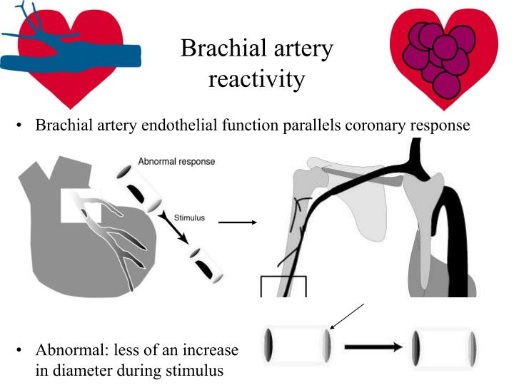 Brachial artery reactivity