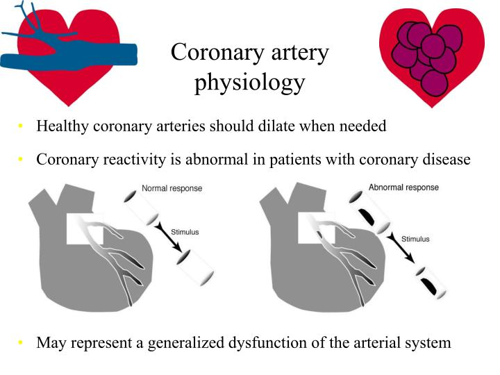 Coronary artery physiology