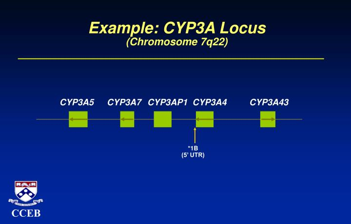 Example cyp3a locus chromosome 7q22
