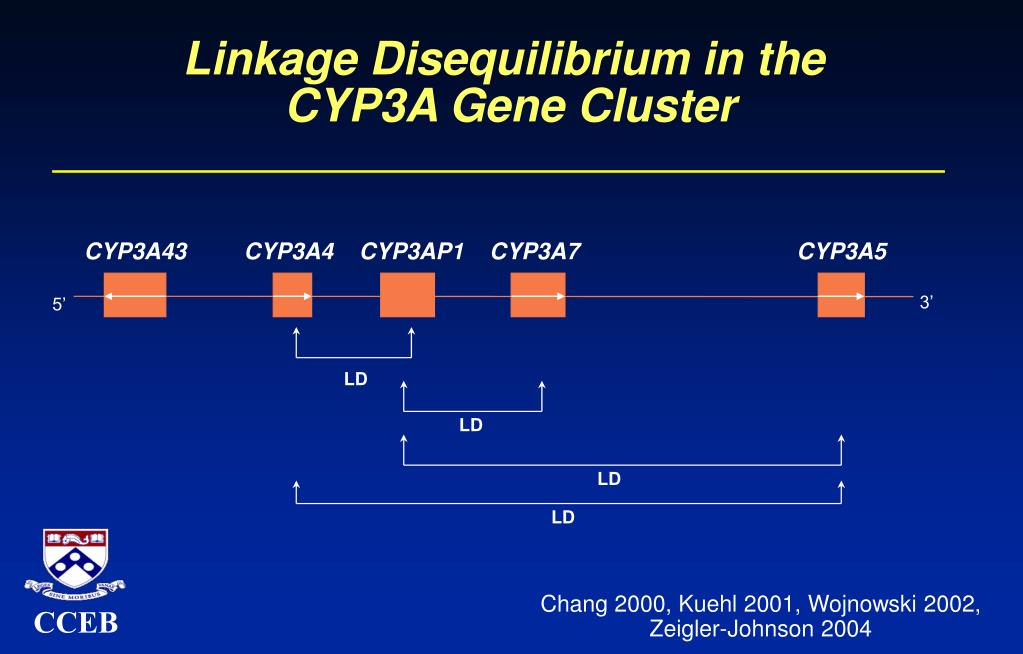Linkage Disequilibrium in the