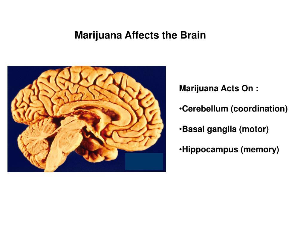 Marijuana Affects the Brain
