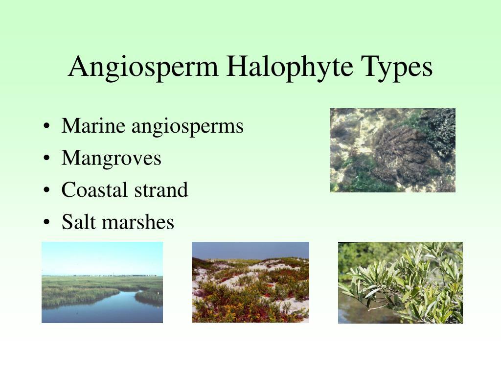 Angiosperm Halophyte Types