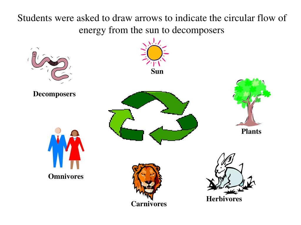 Students were asked to draw arrows to indicate the circular flow of energy from the sun to decomposers