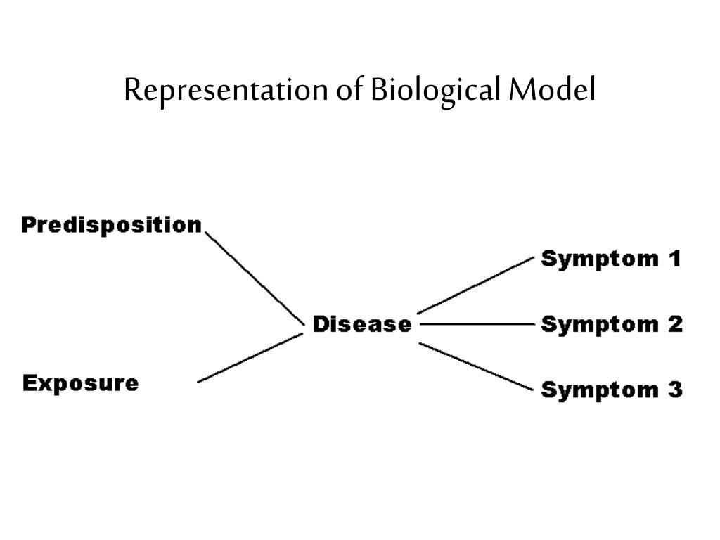 Representation of Biological Model