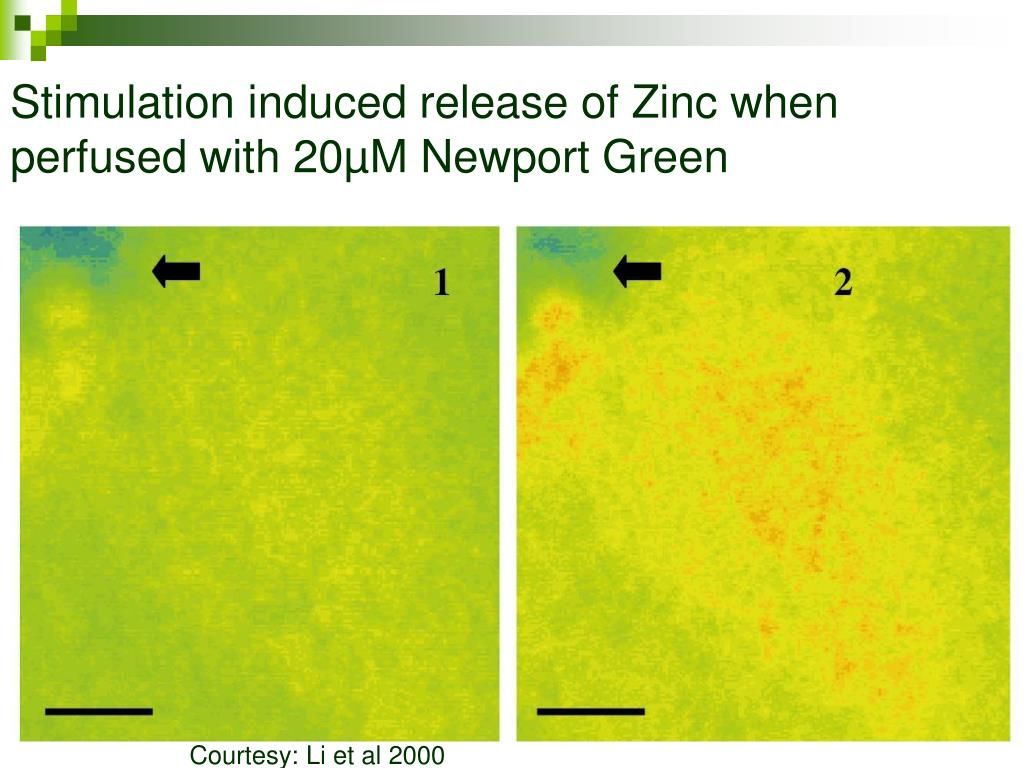 Stimulation induced release of Zinc when perfused with 20