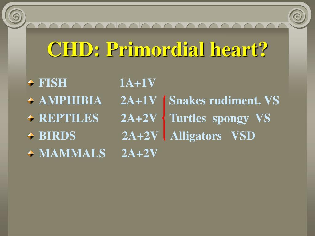 CHD: Primordial heart?