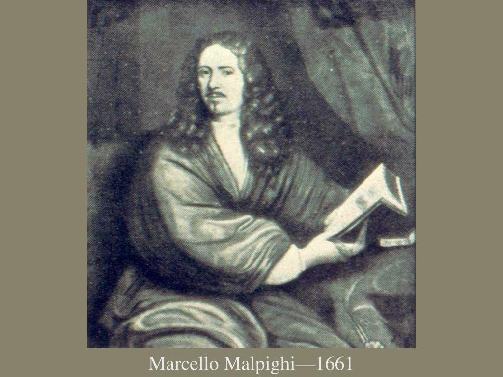 Marcello Malpighi—1661
