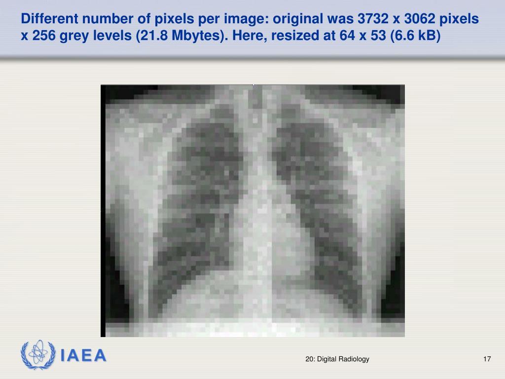 Different number of pixels per image: original was 3732 x 3062 pixels x 256 grey levels (21.8 Mbytes). Here, resized at 64 x 53 (6.6 kB)