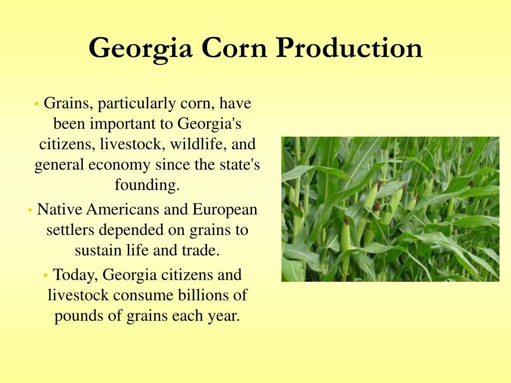 Georgia Corn Production