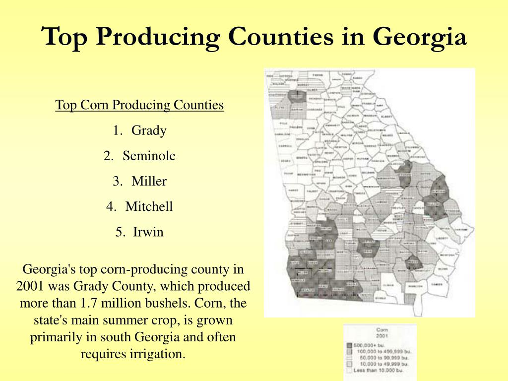 Top Producing Counties in Georgia