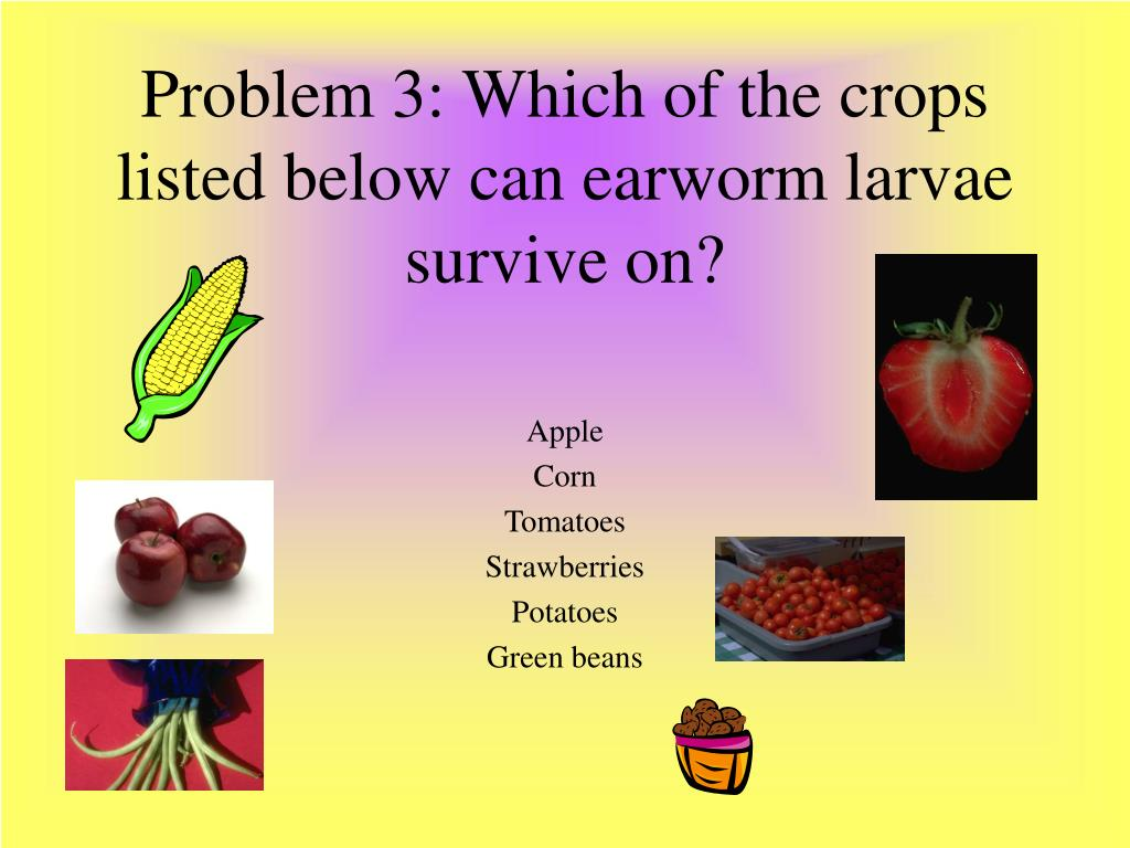 Problem 3: Which of the crops listed below can earworm larvae survive on?