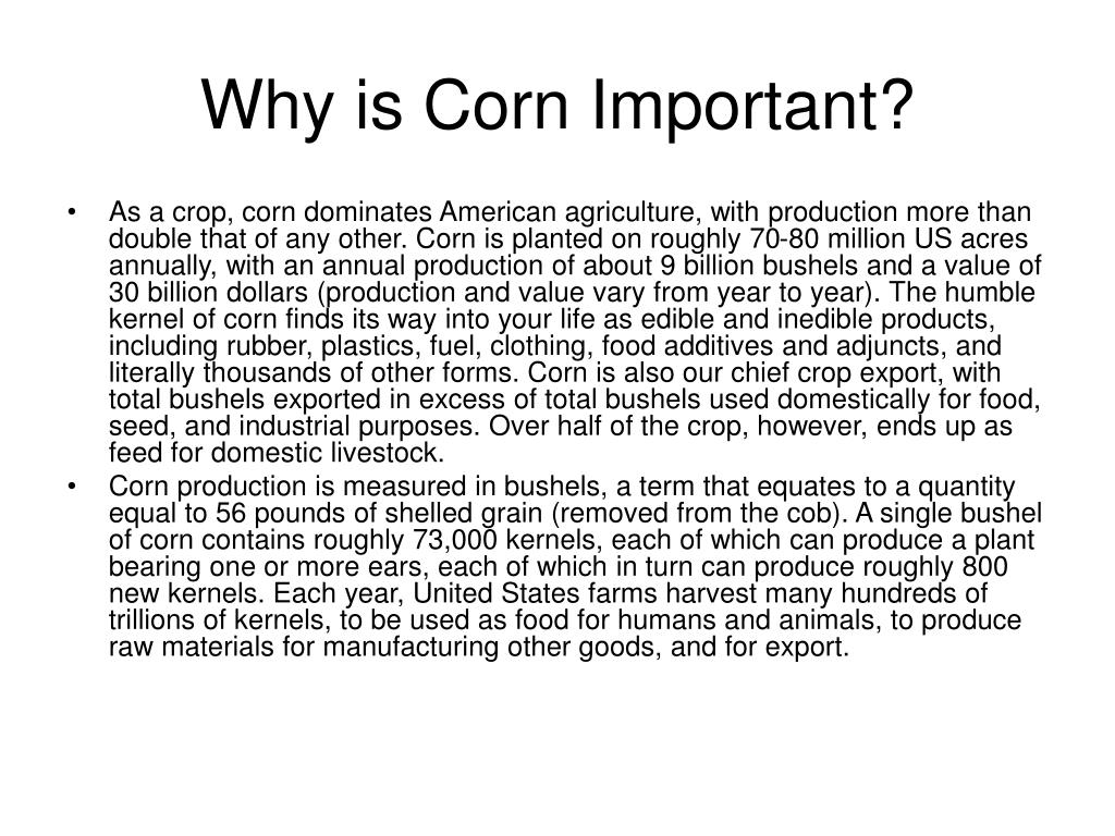 Why is Corn Important?