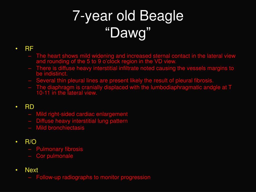 7-year old Beagle