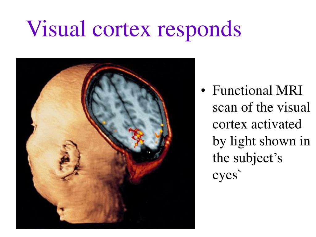 Visual cortex responds