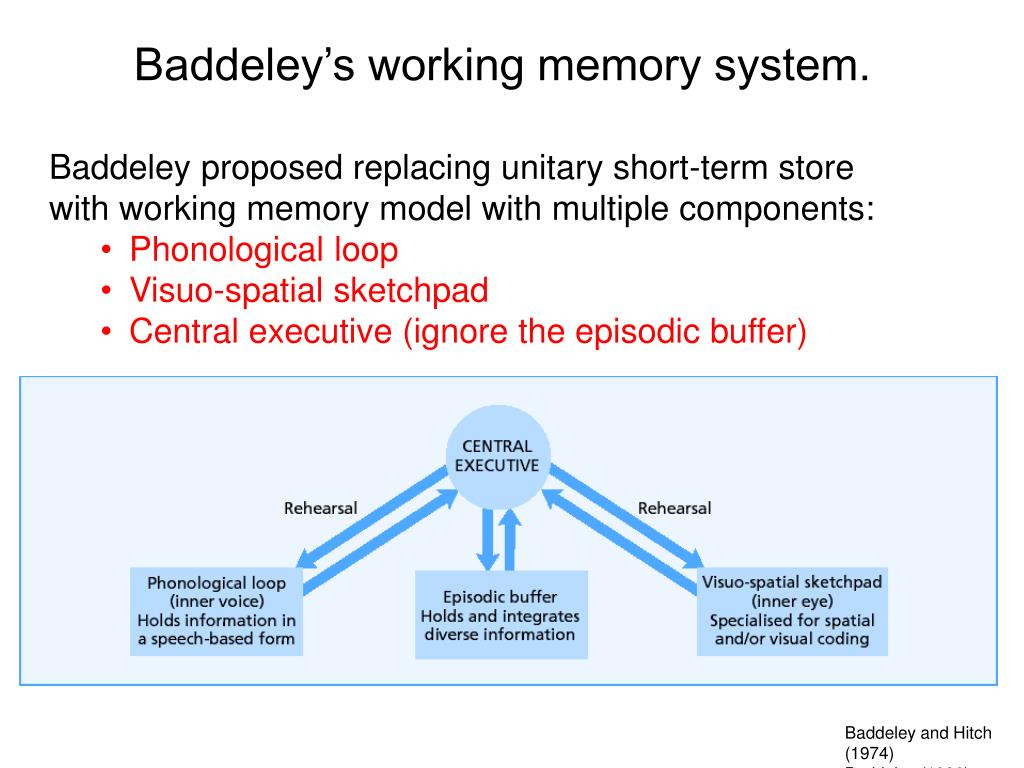 Baddeley's working memory system.