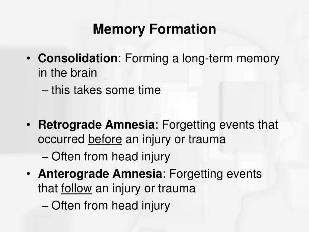 Memory Formation