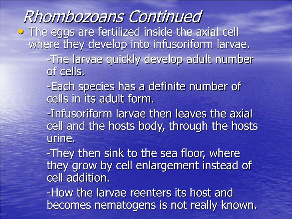 Rhombozoans Continued