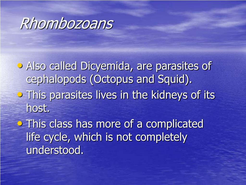 Rhombozoans