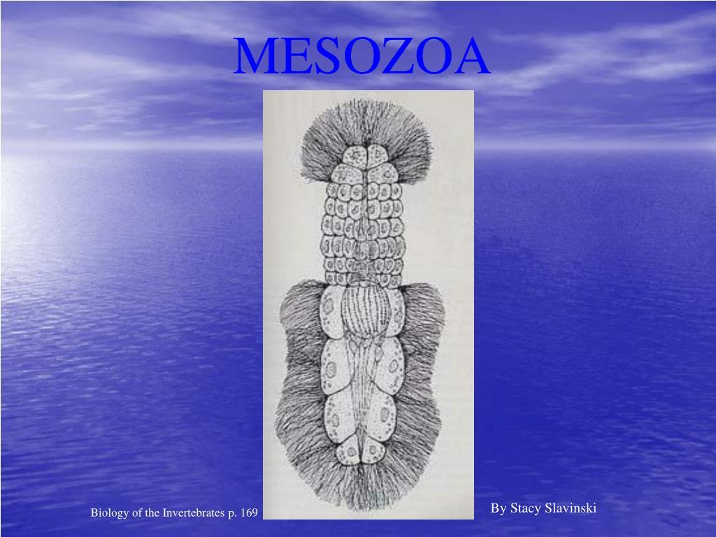 MESOZOA