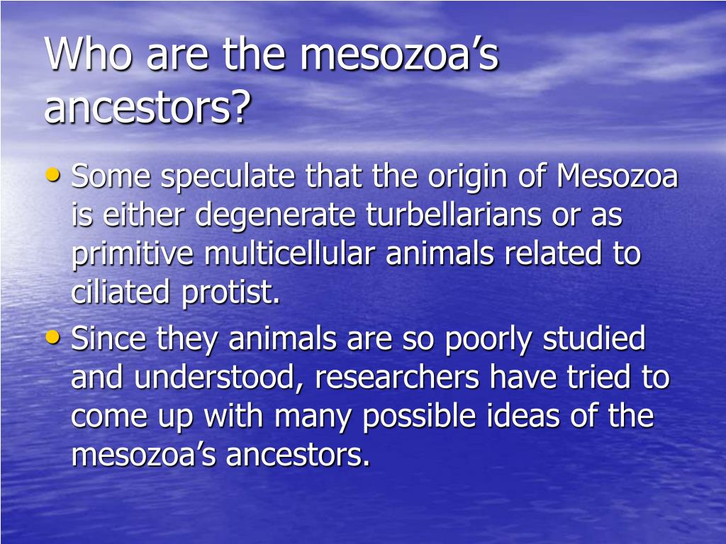 Who are the mesozoa's ancestors?