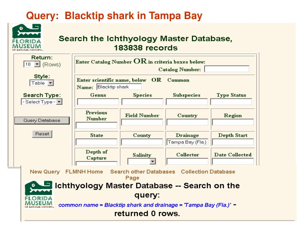 Query:  Blacktip shark in Tampa Bay