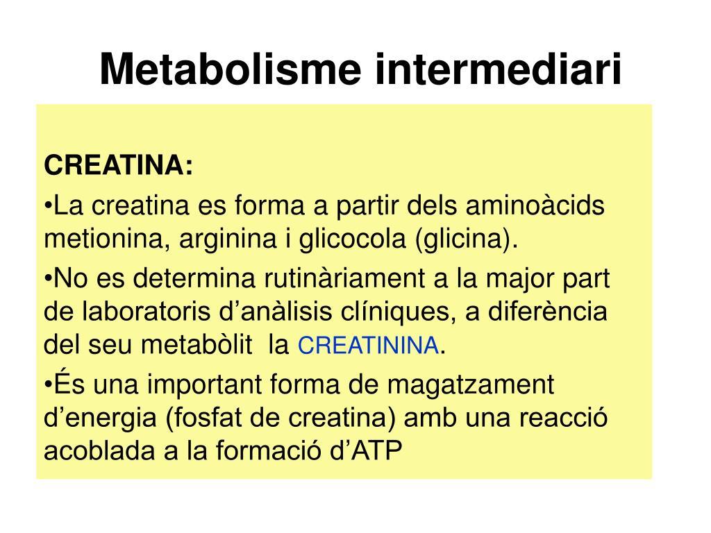 Metabolisme intermediari