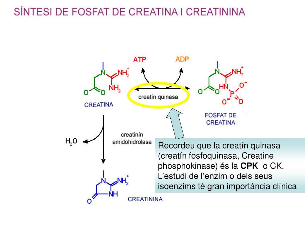 Recordeu que la creatín quinasa (creatín fosfoquinasa, C