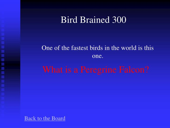 Bird Brained 300