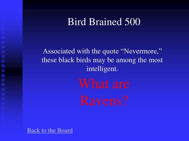 Bird Brained 500