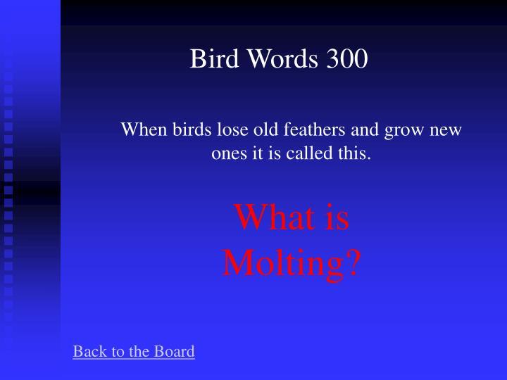 Bird Words 300