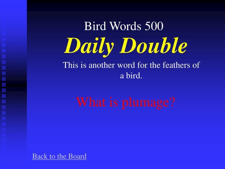 Bird Words 500