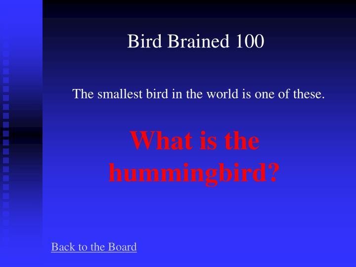 Bird Brained 100