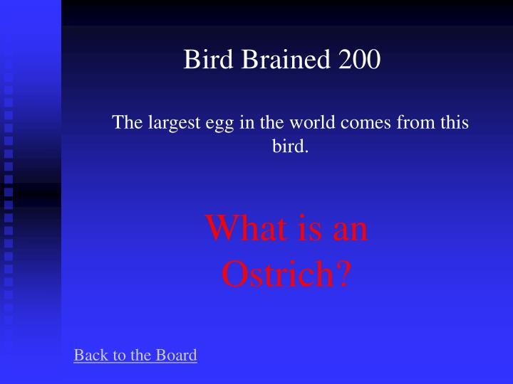 Bird Brained 200