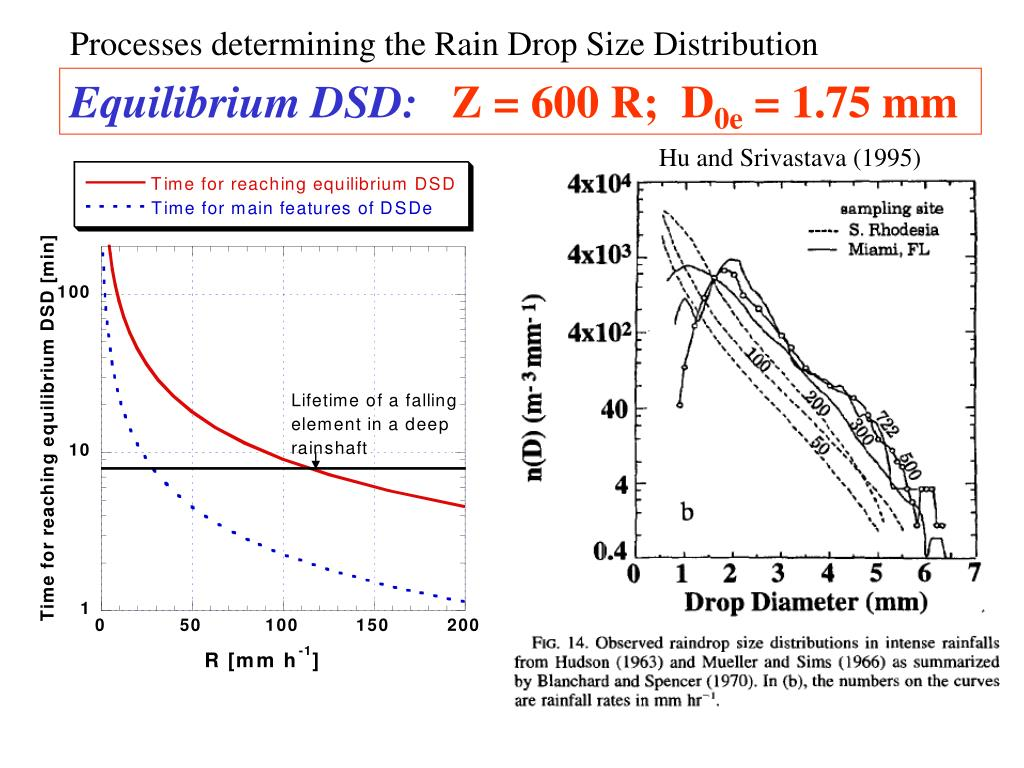 Processes determining the Rain Drop Size Distribution