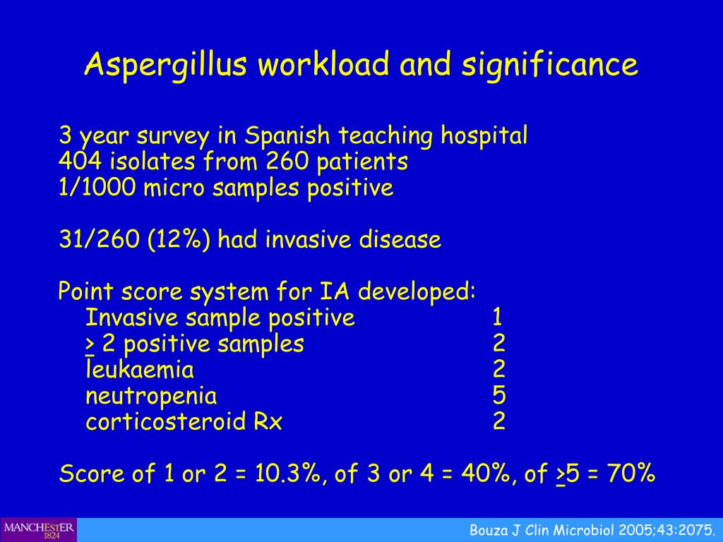Aspergillus workload and significance