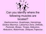 can you identify where the following muscles are located