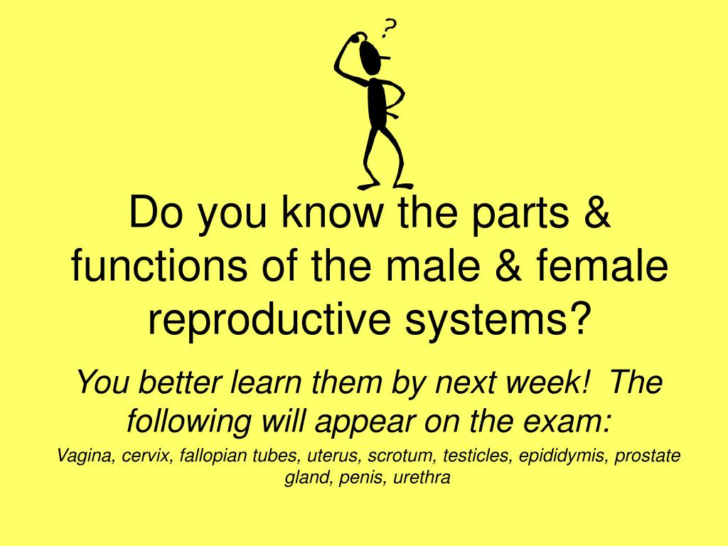 Do you know the parts & functions of the male & female reproductive systems?