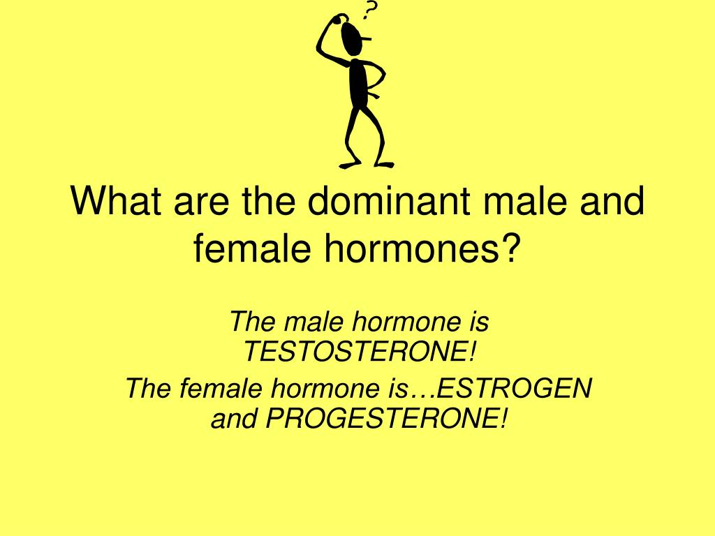 What are the dominant male and female hormones?