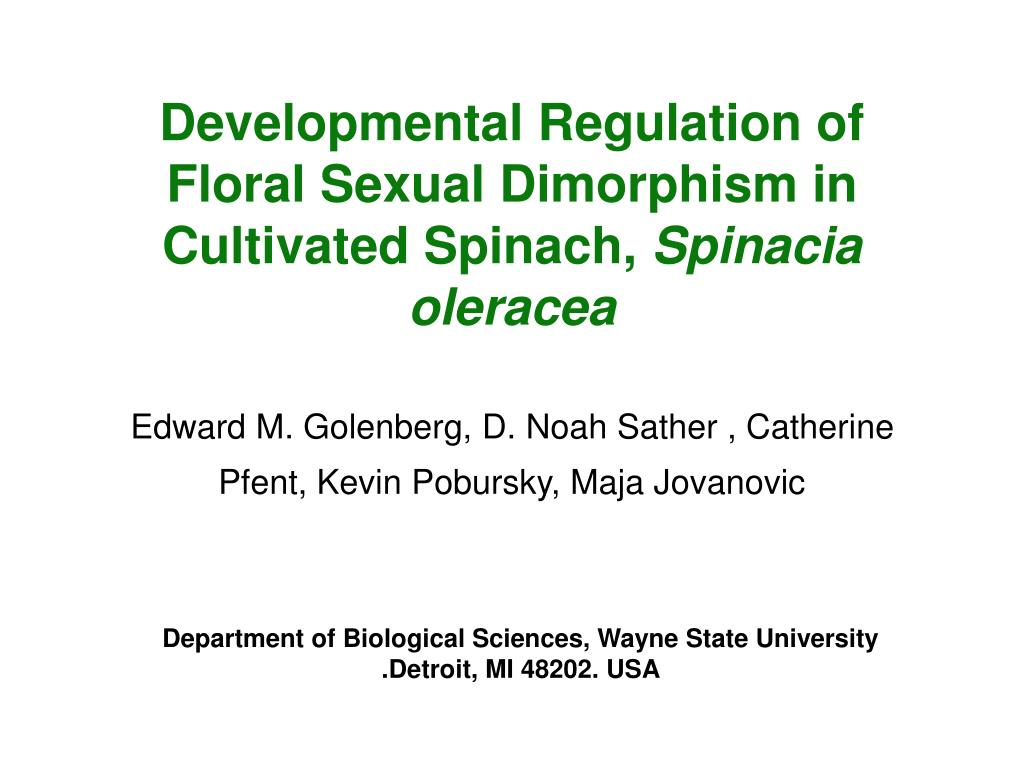 Developmental Regulation of Floral Sexual Dimorphism in Cultivated Spinach,