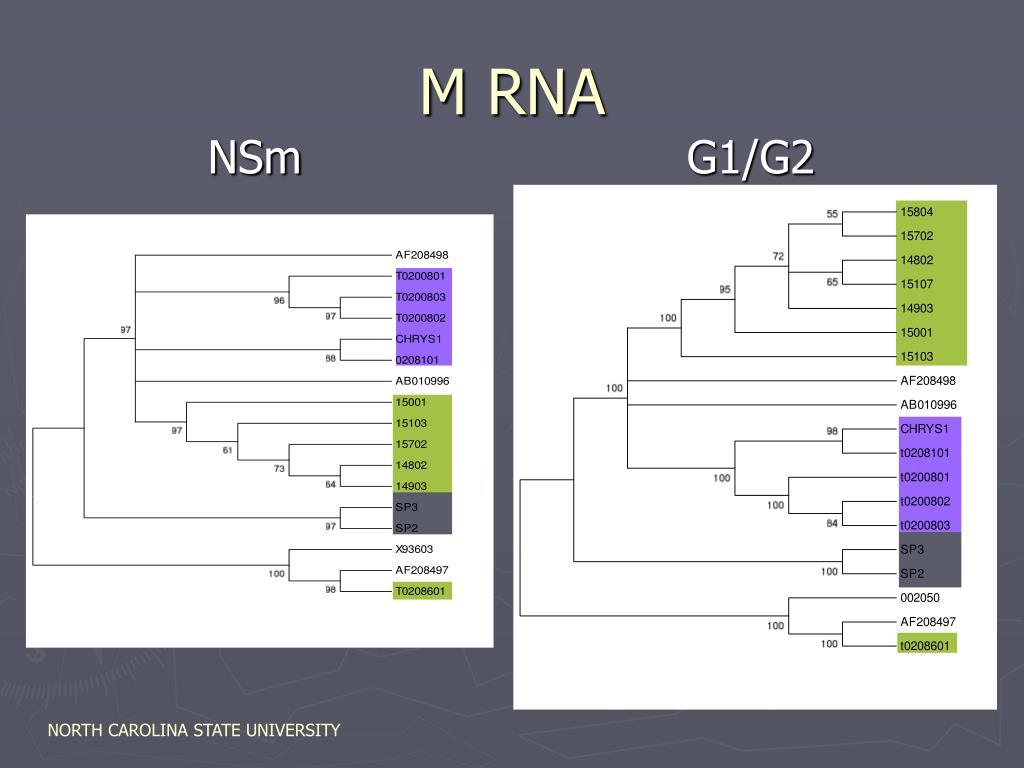 M RNA